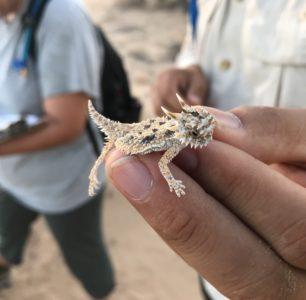 Importancia ecológica de las lagartijas